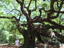 Angel Tree Fotografering för Bildbyråer