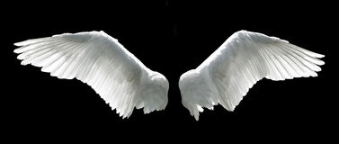 Angel wings. Isolated on the black background