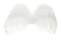 Angel Wings. On White Background royalty free stock image