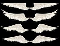 Angel Wings ilustração do vetor