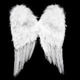 Angel Wings Imágenes de archivo libres de regalías