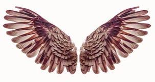 Angel Wings Stockfoto