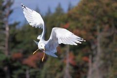 Angel Wings dans les régions boisées photo libre de droits