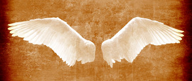 Angel wings on grunge texture in brown tones.  Royalty Free Stock Images