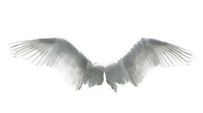 Angel wings isolated on white. Background Stock Image