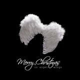 Angel wings lit from above. White angel wings lit from above - christmas greeting card on black stock image