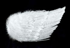 Angel Wings Side View Isolated on Black Stock Photography