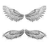 Angel wings, vector illustration. Vector angel hand drawn wings, vector illustration Stock Images