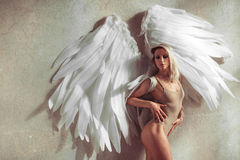 Angel woman royalty free stock photos