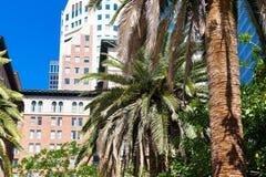 angeles los horisont I stadens centrum område; Skyskrapa Royaltyfri Foto