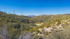 Angeles Mountain Meadows Στοκ φωτογραφία με δικαίωμα ελεύθερης χρήσης