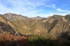 Angeles-staatlicher Wald Stockfotos
