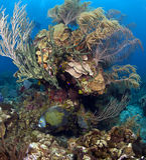 angelfish γαλλικά Στοκ εικόνες με δικαίωμα ελεύθερης χρήσης