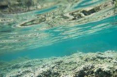 Angelfish και Tangs: Νησί Dravuni Στοκ Εικόνα