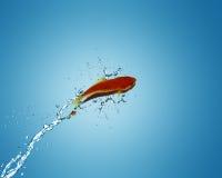 Angelfish σε άλλο κύπελλο Στοκ φωτογραφίες με δικαίωμα ελεύθερης χρήσης