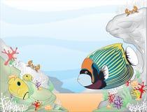 Angelfish императора Стоковые Фотографии RF