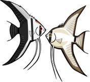 angelfish 2 бесплатная иллюстрация