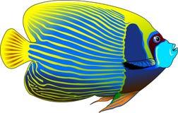 angelfish Obrazy Stock