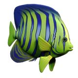 Angelfish Photo libre de droits