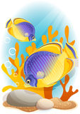 Angelfish. Vector illustration - Two angelfish  on the seabed Royalty Free Stock Photos