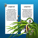Angelfish among the algae with white card for text Stock Image