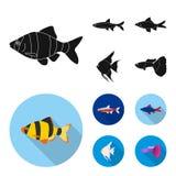 Angelfish, błonie, barbus, neonowy Łowi ustalone inkasowe ikony w czarnym, mieszkanie symbolu zapasu ilustraci stylowa wektorowa  ilustracja wektor