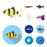Angelfish, common, barbus, neon.Fish set collection icons in cartoon,flat style vector symbol stock illustration web. Angelfish, common, barbus, neon.Fish set Royalty Free Stock Image