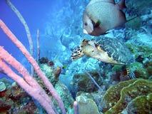 Angelfish con la tartaruga Fotografia Stock Libera da Diritti