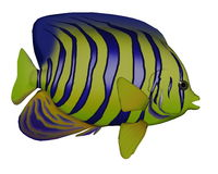 Angelfish - 3D render Stock Photos