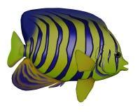 Angelfish - 3D render Stock Photos