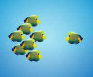 Angelfish in difference way. One angelfish and group of  angelfish in difference way Stock Images