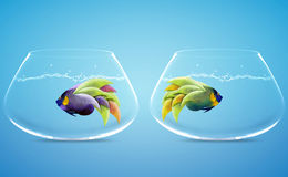 Angelfish in difference way Stock Photos