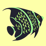 Angelfish the fish a black  vector illustration Royalty Free Stock Image