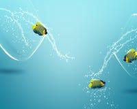 angelfish fishbowl πηδώντας έξω Στοκ Εικόνες