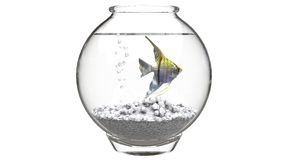 Angelfish in fishbowl with white pebbles and air bubbles Stock Photo
