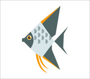 Angelfish flat illustration Royalty Free Stock Photography