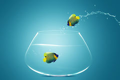 Angelfish jumbing to other bowl. Good Concept for new love, new Opprtunity and challenge concept Royalty Free Stock Photo