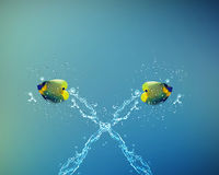 Angelfish jumping Stock Photo