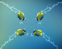 Angelfish jumping Royalty Free Stock Photography