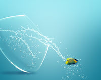 Angelfish jumping out of  fishbowl Royalty Free Stock Images