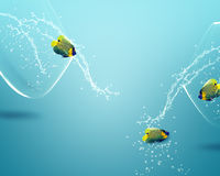 Angelfish jumping out of  fishbowl. Two angelfish jumping out of  fishbowl to new one, one failed one win Stock Images