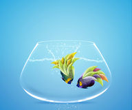 Angelfish jumping to other bowl Stock Photography