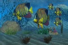 angelfish królewski Zdjęcie Royalty Free