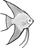 Angelfish Stock Photo