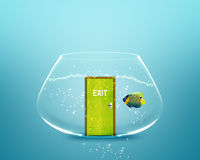 Angelfish in small bowl Stock Images