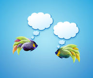Angelfish with speech bubbles. Stock Photography
