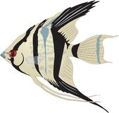 Angelfish Swimming Illustration. A vector illustration of an angelfish swimming stock illustration