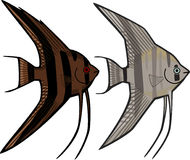 angelfishes иллюстрация вектора