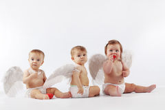 Angelic babies. Group of cute valentine angel babies sitting on light studio background Royalty Free Stock Images