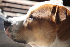 Angelic dog. Extreme close up of innocent looking dog Royalty Free Stock Photo